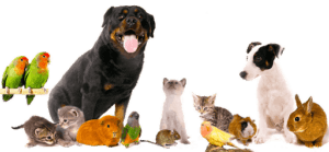 مراقبت از حیوانات خانگی
