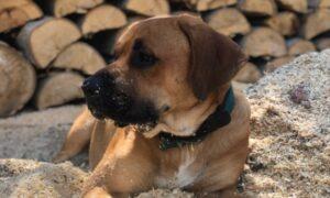 حیوانات خانگی شما و خطرات دود ناشی از آتش سوزی